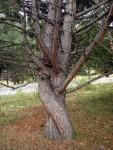 árbol transgeneracional y relación de pareja