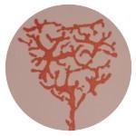 Archetipos, Meritxell Masachs Serra, Centro Serconsciente, Psicologa, Biodescodificación, Técnica Tomatis, Transgeneracional
