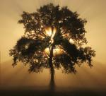 análisis árbol genealógico www.archetipos.com